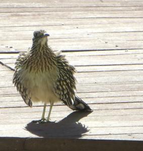 jan birds 002