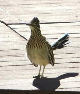 jan birds 003