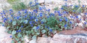 wildflowers 018