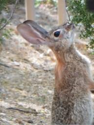 rabbits 001