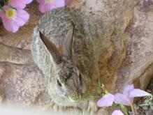 rabbits 008