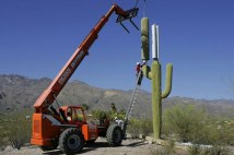 cell-phone-tower-disguised-as-a-cactus-1