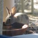 baby rabbit 007