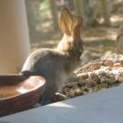 baby rabbit 010