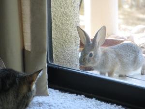 baby rabbit 012
