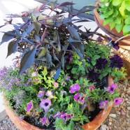dark plants 002