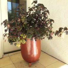 dark plants 004