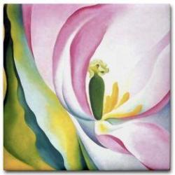 o'keefe tulip