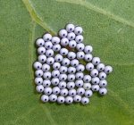 insect-eggs-1